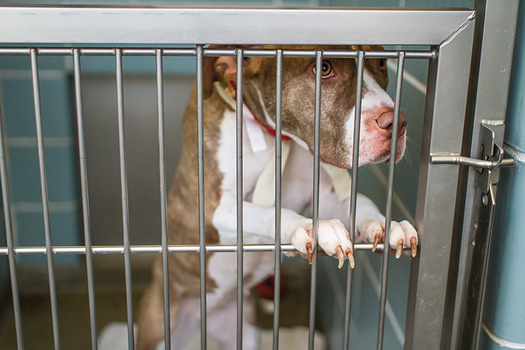 The Chicago City Council has introduced an ordinance to restrict the retail sale of dogs from large-scale commercial breeders.