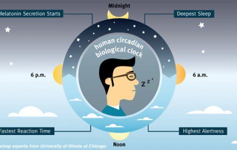 Human circadian biological clock