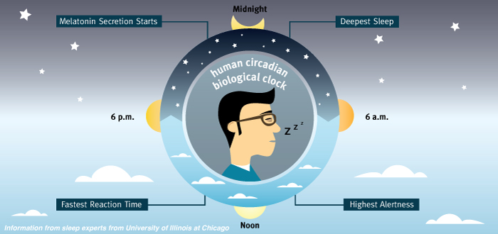Human circadian biological clock
