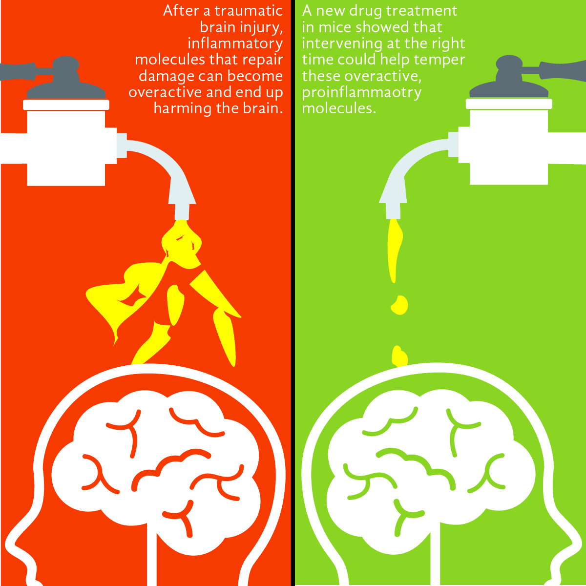 Drug intervention for brain injury, dementia link may be effective