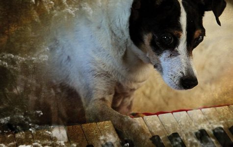 Lolabelle, Anderson's dog and protagonist in the film, is seen playing the piano on the movie poster.
