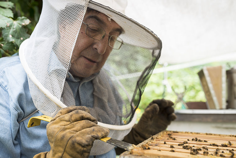 Pedro Ortiz, an urban beekeeper, extracting his bees from the hive