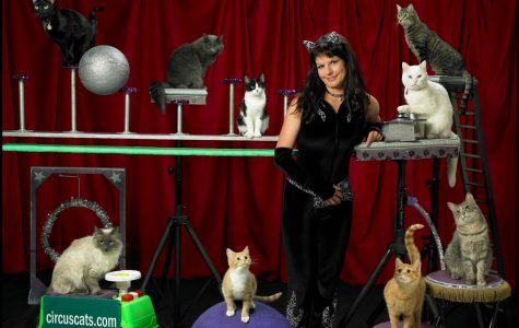 Acro-Cats, 'meow-sicians' entertain with variety show