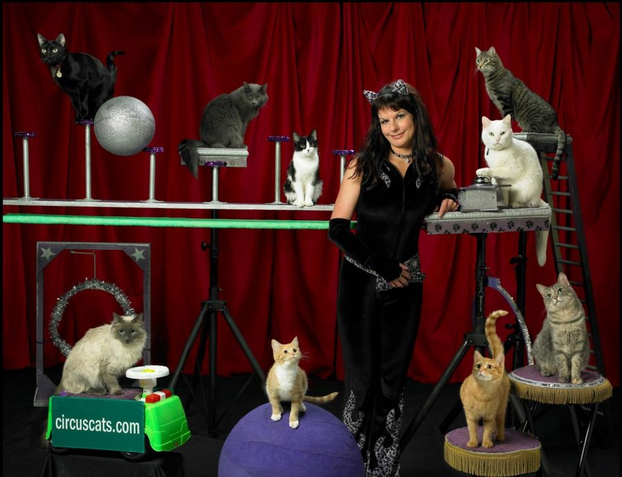 Samantha Martin and her traveling troupe of Acro-Cats have performed all over the world and made TV appearances.