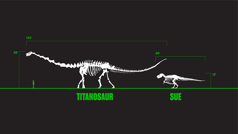 SUE, the largest T. rex fossil ever found, is overshadowed by the massive Titanosaur. SUE's stomping grounds in Stanley Field Hall at the Field Museum of Natural History will be taken over by the Titanosaur starting spring 2018.