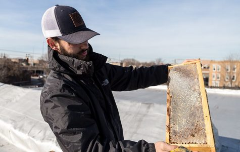 'Honey, I'm home'—Bees find hive in Bridgeport