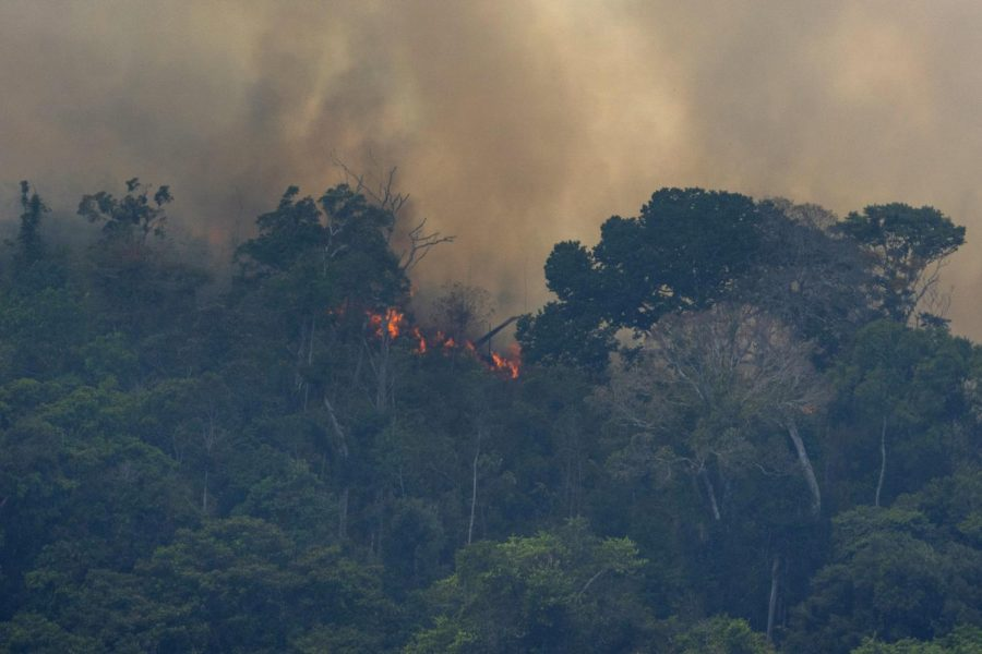 Three weeks ago, parts of the Amazon rainforest caught on fire.