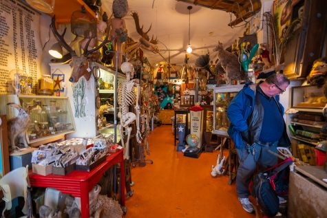 Meet Chicago's home of the strange: Woolly Mammoth antique store